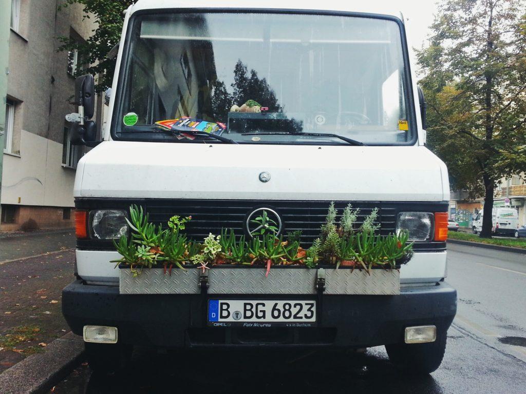 van succulents